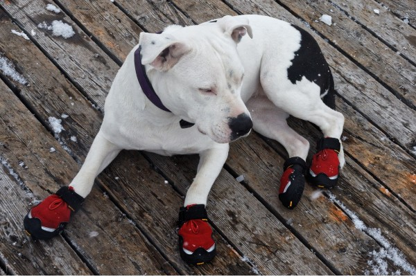 An In Depth Review of the Best Dog Shoes of 2018